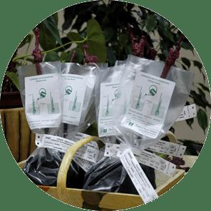 Plants de vignes individuels