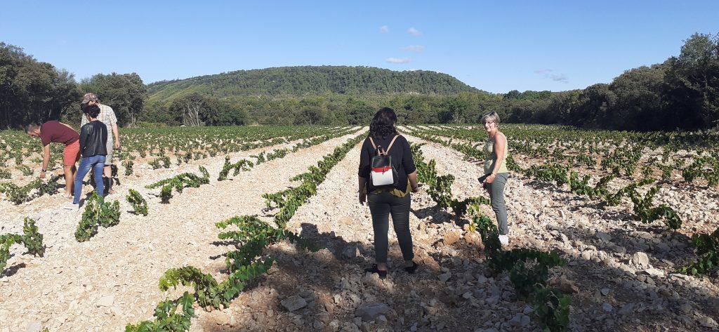 Plantation 2019 Syrah et Grenache au Pic Saint Loup.